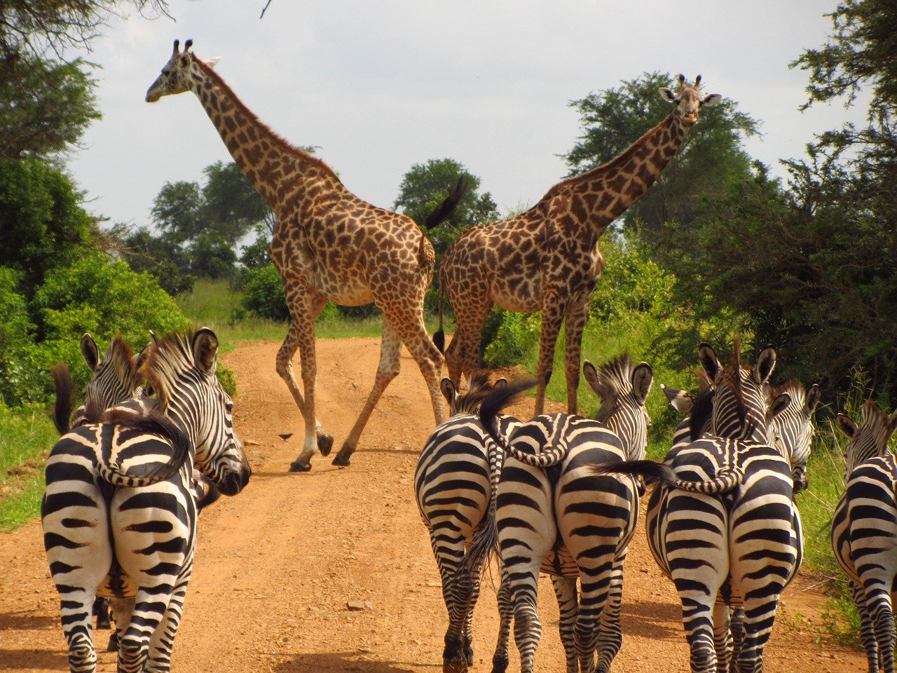 Laissez-vous tenter pas un safari en Tanzanie